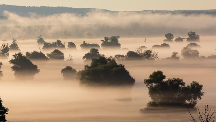 Nebel über der Oderaue im Nationalpark